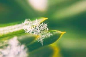 snowflake debt method