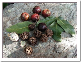 five ways to incorporate bush tucker into your diet
