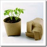 Seedlings-in-a-Toilet-Paper-Tube