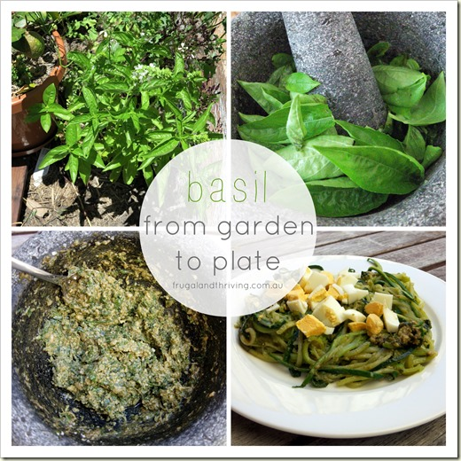 Basil from garden to plate | Homemade Pesto Recipe | Frugal and Thriving