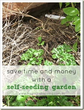 save money in the garden by being lazy