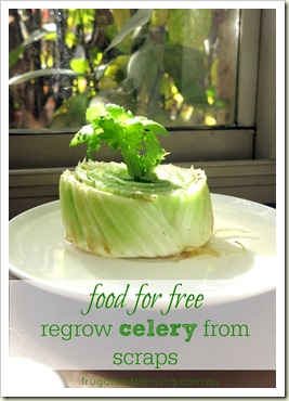food for free–regrow celery from the scraps