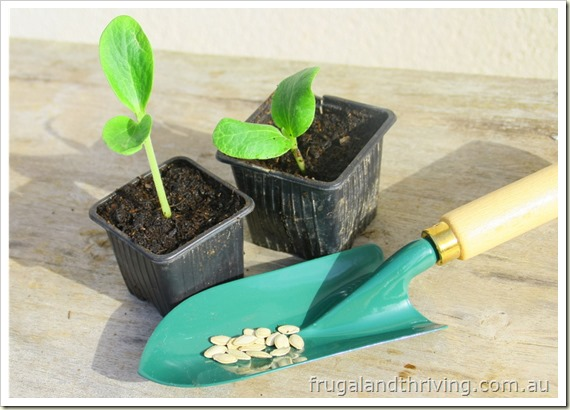 5 secrets to raising seedlings for better germination