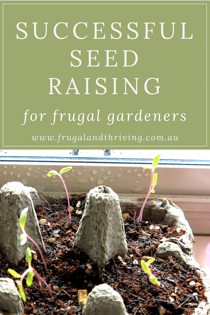 frugal seed raising