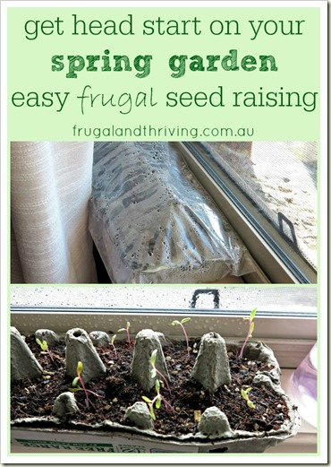 raise seedlings indoors in egg cartons