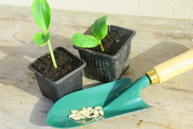 successful seed raising for frugal gardeners