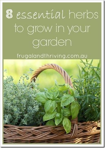 8 essential herbs to grow in your garden P