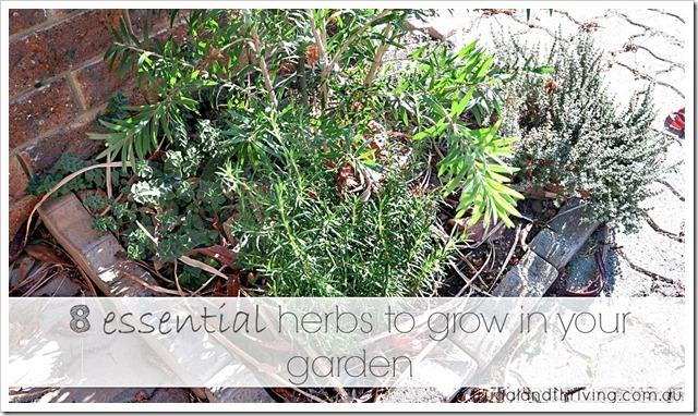 8 essential herbs to grow in your garden