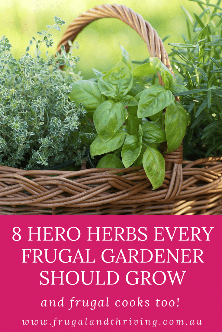 Fresh herbs take your food from ok to gourmet. But they are expensive to buy. Save money by growing your own. Discover the 8 essential herbs to grow. #frugalgardening