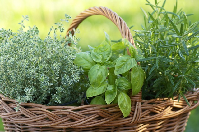8 Hero Herbs that Every Frugal Gardener Should Grow
