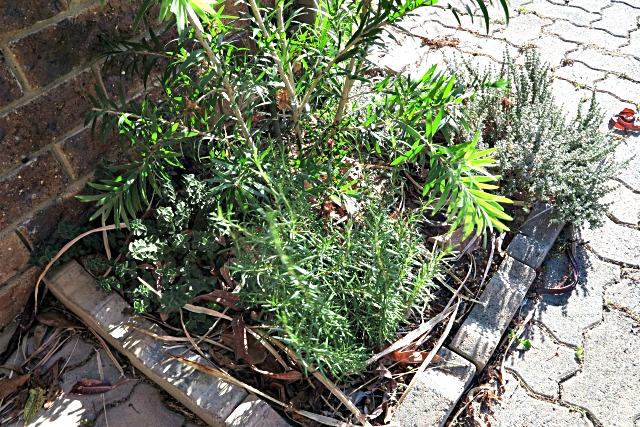urban herb garden