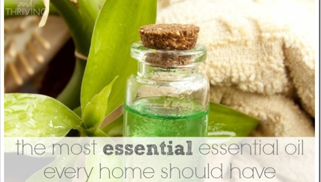 tea tree oil–the essential oil every home should have