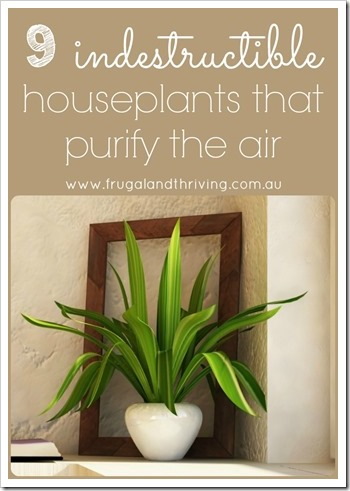 9 indestructible houseplants that purify the air pin