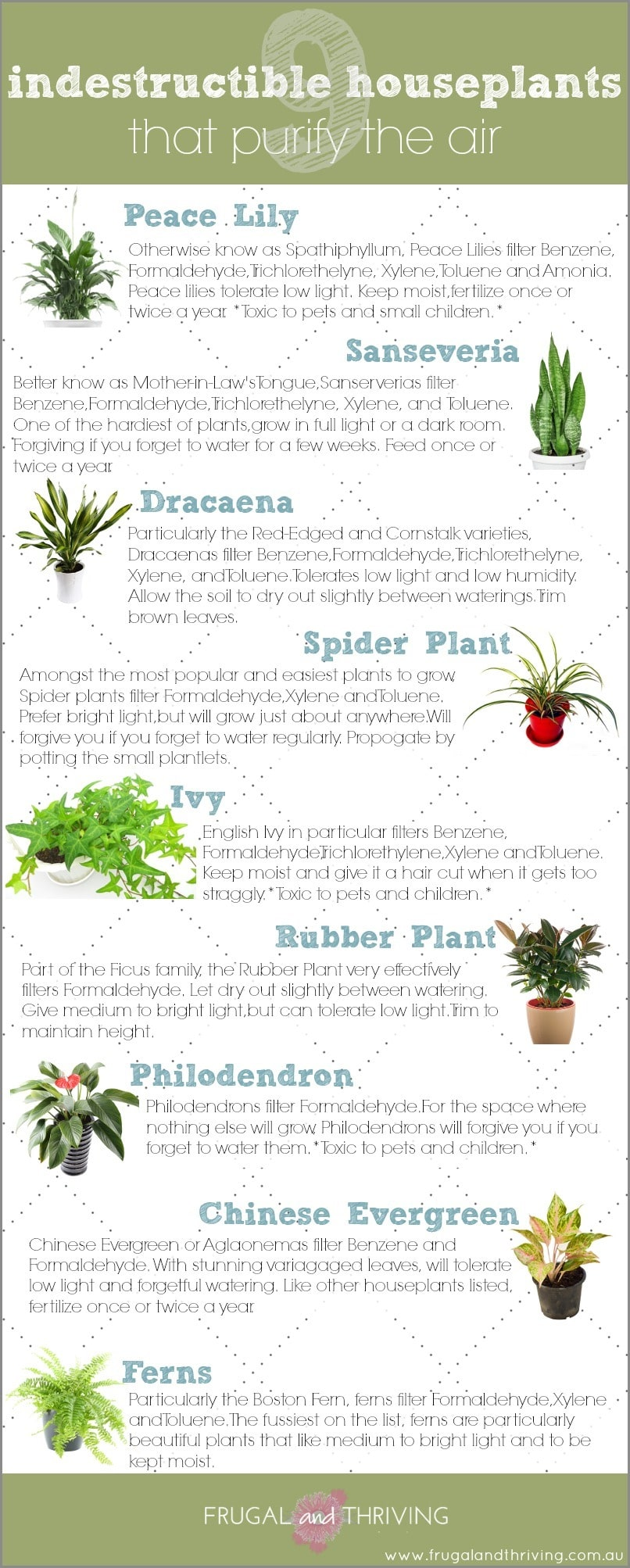9 indestructible houseplants that purify the air