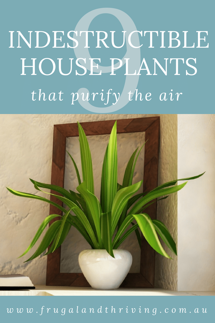 indestructible house plants that purify the air pin