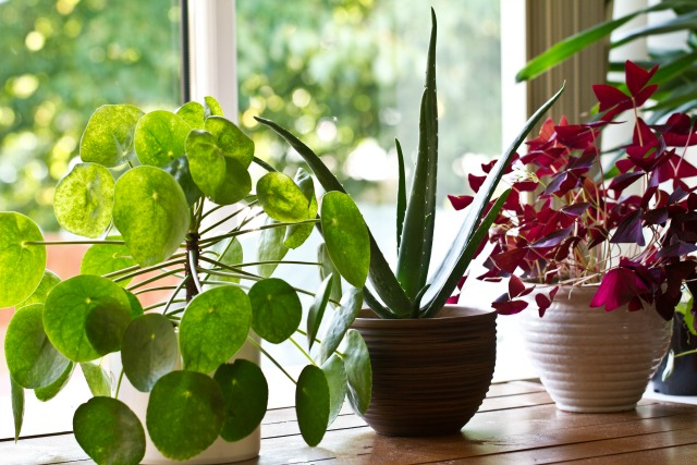 9 Houseplants that purify air that brown thumbs can't kill.