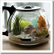 Coffee-Pot-Terrarium--550x286