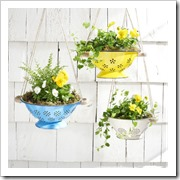 colander planter country living