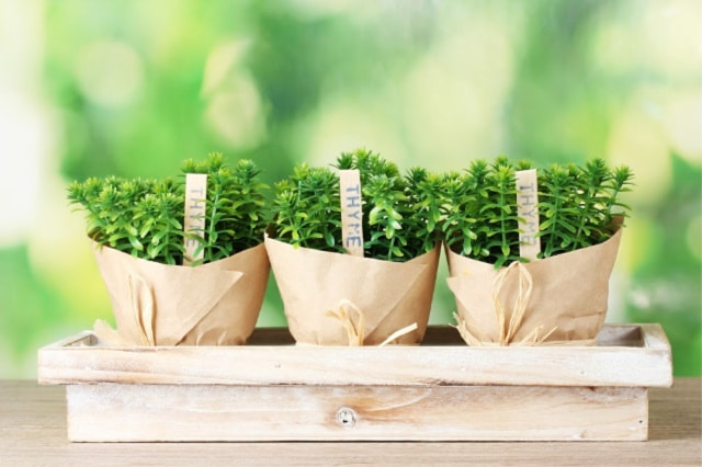 low waste gift ideas for gardeners 1