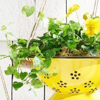 How to Convert a Colander Into a Planter