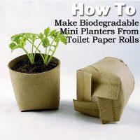 Biodegradable Mini Planters