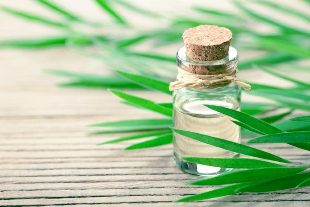 bottle of tea tree oil and tea tree leaves representing ways to use tea tree oil